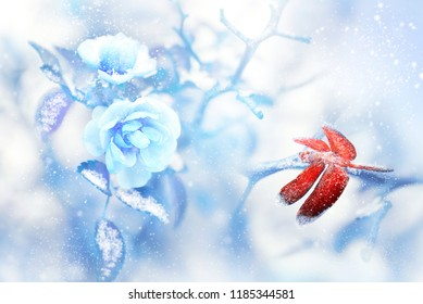 Red dragonfly in the snow on blue roses in a fairy garden. Artistic Christmas image. Red and blue tone.