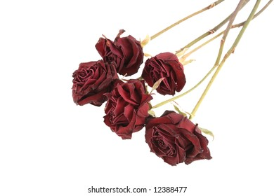 Red dried roses isolated on white background (saved with clipping path)
