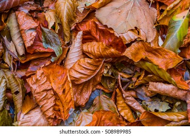 red dry autumn leaves background