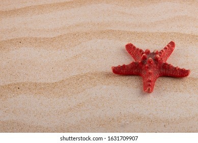 Red dry starfish laying on yellow sand beach. Copy space for text