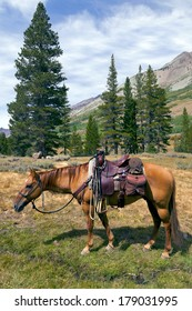 Red Dun mountain horse under saddle, saddle bags, rain slicker, Summer, Emigrant Wilderness, Stanislaus National Forest, California
