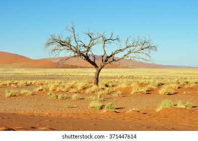 Red dune and dead tree in the namibian Namib desert, Naukluft Park, Namibia, Africa