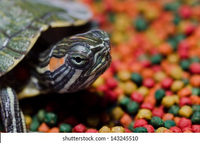 red eared turtle with colorful pet food pellets