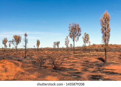 Red earth and trees burned by Aborigines in the Australian outback on a beautiful sunny day