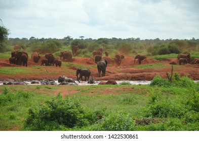 Red Elefant herd at waterhole having bath Tsavo West National Park Kenya