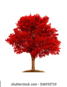 red elm tree, isolated over white