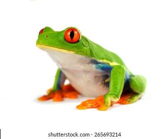 лягушка с красным глазом