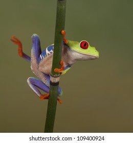 Treefrogs and frogs