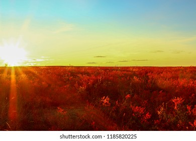 Red fall in the artic