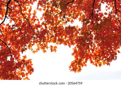 Red fall leaves forming a border