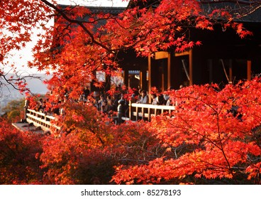 Red fall leaves at Kiyomizu-dera temple in Kyoto, Japan, with onlookers in the background