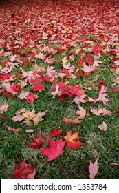 Red Fall Leaves on Green Grass (focus on foreground leaves, vertical orientation)