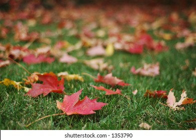 Red Fall Leaves on Green Grass (focus on foreground leaves, horizontal orientation)