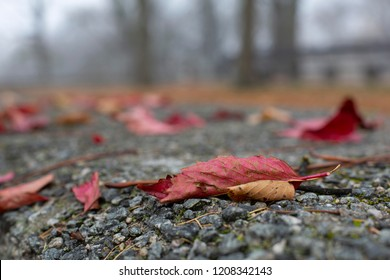 Red fallen autumn leaves on grey surface in the park