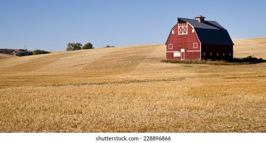 Red Farm Barn Cut Straw Just Harvested