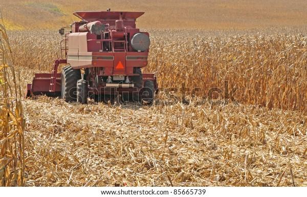 Red farm combine harvesting a field of golden corn