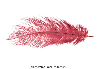 The red feather on a white background