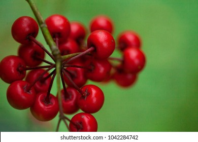 red field fruits