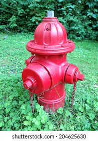 Red fire hydrant among green ivy and grass