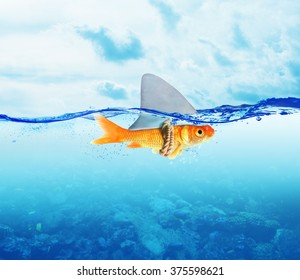 Red Fish  as shark