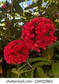 Red flawer beautiful