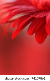 Red Flower Background Images