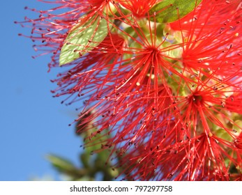 red flower with bee in greece in stahlis in kreta