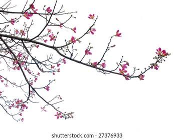 фотообои red flower blooming on the tree