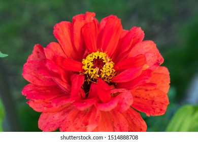 red flower blossom on green background