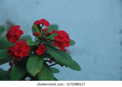 red flower a blurred background