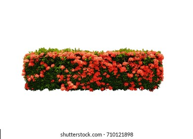 red flower bush tree isolated with clipping path