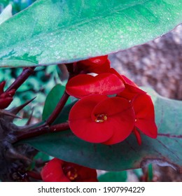 red flower covered by green leafs thorn branches
