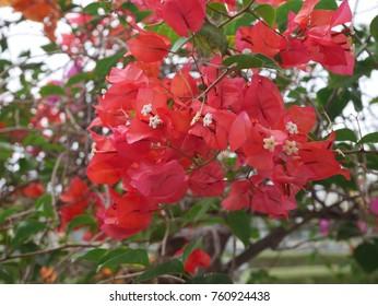 Red Flower in daylight