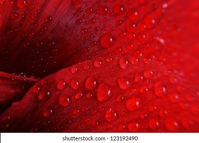 red flower with drops - macro