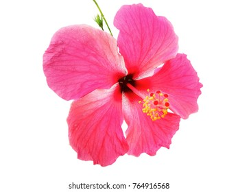Red flower in the forest clipping path