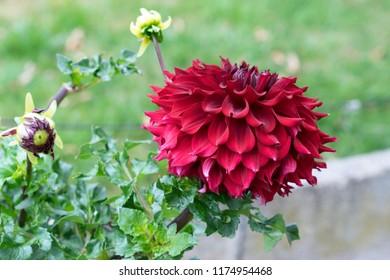 red flower in a garden