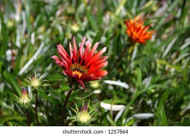 Red flower in green grass