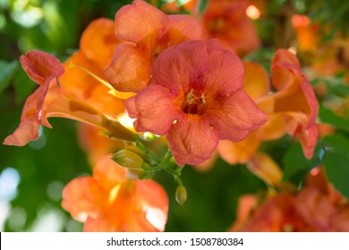Red flower with green leaves in the background. Red nasturtium. Floristry, flower concept. Horizontal close-up detail.
