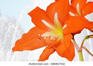 Red flower of a hippeastrum against the background of the flowing water in the fountain.