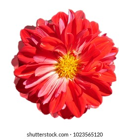 red flower isolate white background