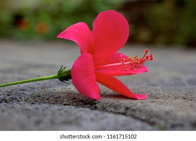 Red flower laying on ground