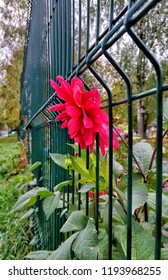 Red Flower Nature Garden Barrier Wall Block Obstacle Hurdle Fence Fencing  Lattice Grid