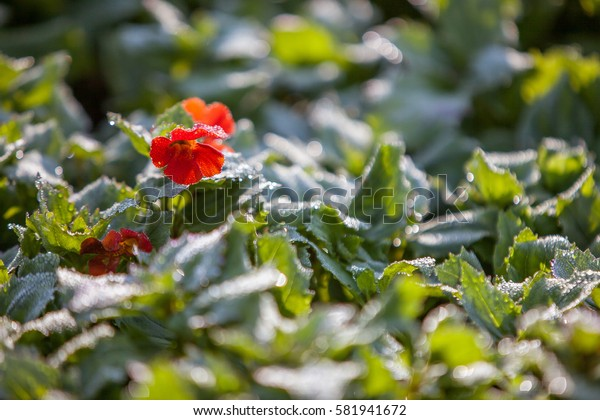 Red flower on green leafs background with water drops
