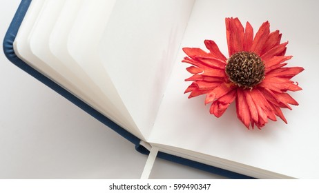 red flower on notebook top view close up