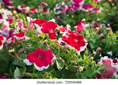 Red flower on public park.