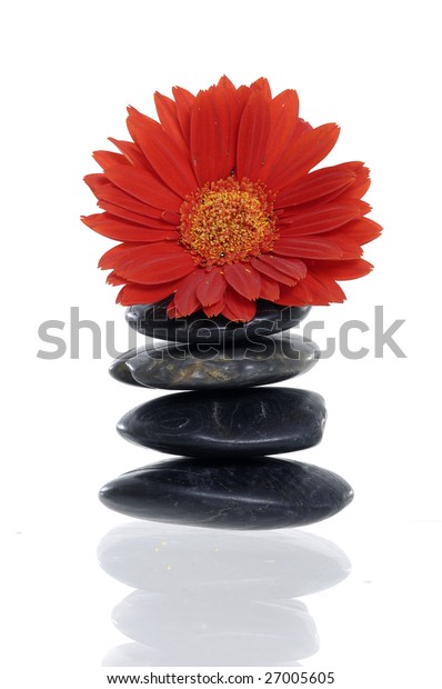 Red flower on stones with reflection on white