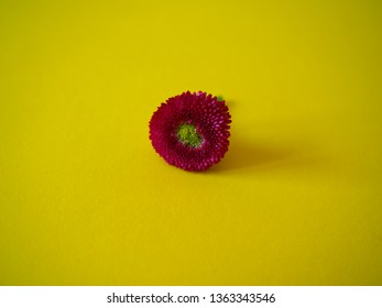 Red flower on yellow background