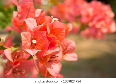 Red flower in the outdoors garden - Beautiful nature concept