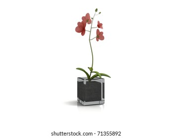 red flower in a pot