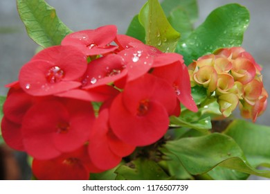 Red flower with rain drop and green leaf
